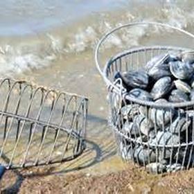 Go clamming - Bucket List Ideas