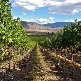 Tour the Vineyards of the Okanagan, BC - Bucket List Ideas