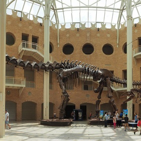 Go to the Fernbank Museum in Atlanta - Bucket List Ideas