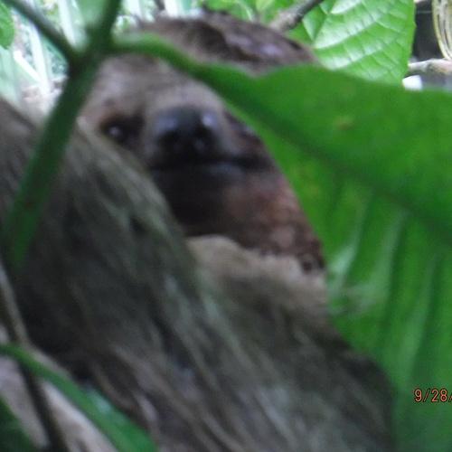 See a sloth - Bucket List Ideas