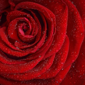 Ruik een roos - Bucket List Ideas
