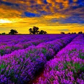 Visit a lavender field - Bucket List Ideas