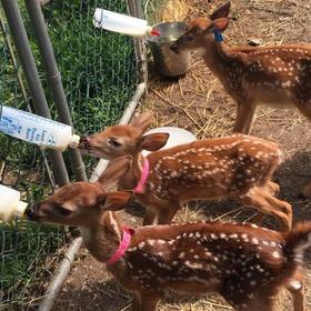 Help build an animal sanctuary - Bucket List Ideas