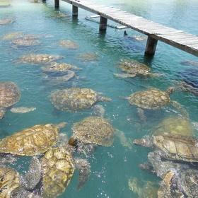 Visit Grand Cayman Turtle Farm, Cayman Islands - Bucket List Ideas