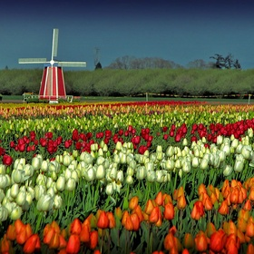 See the Tulips in Holland - Bucket List Ideas