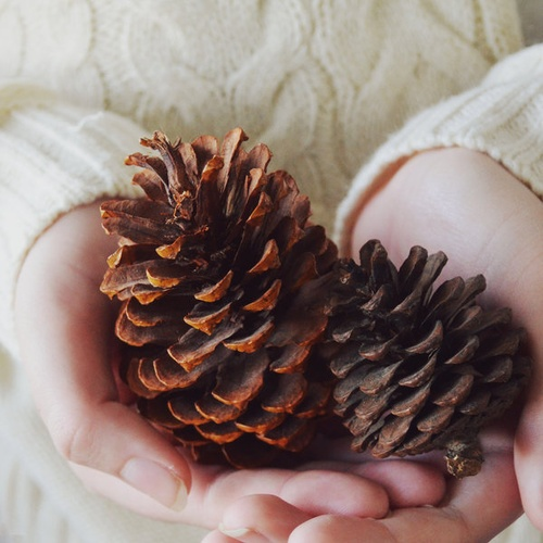 Collect Pine cone - Bucket List Ideas