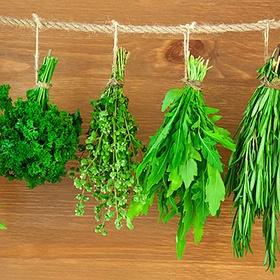 Cook with herbs I've grown - Bucket List Ideas