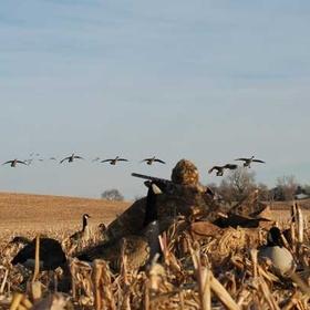Hunt Goose from a Field - Bucket List Ideas