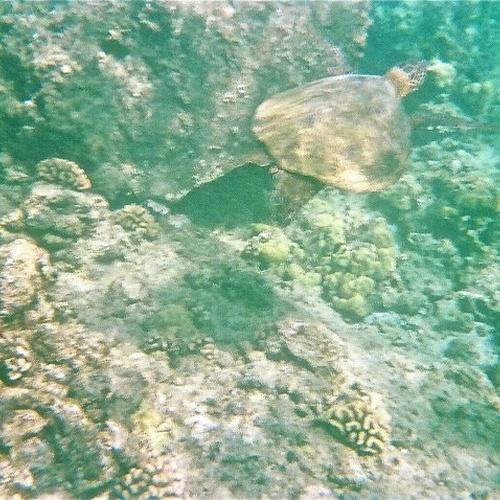 Swim with a Sea Turtle in the Wild - Bucket List Ideas