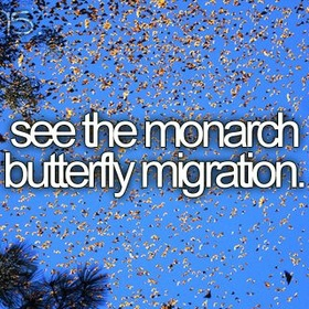 See the monarch butterfly migration - valle de bravo, mexico - Bucket List Ideas