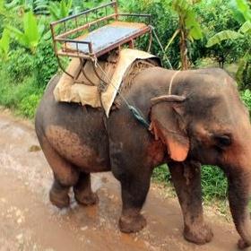 Feed an elephant up close and pet - Bucket List Ideas