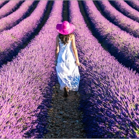 See the  Lavender Fields in Provence, France - Bucket List Ideas