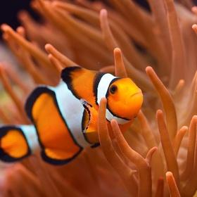 Own a clown fish - Bucket List Ideas