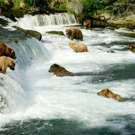 See wild bears catch salmon in Alaska - Bucket List Ideas