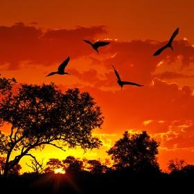 Travel to: Kenya - Bucket List Ideas