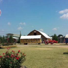 Spend the day at Dewberry Farm - Bucket List Ideas