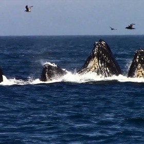 Go whale watching at Monterey Bay | USA - Bucket List Ideas
