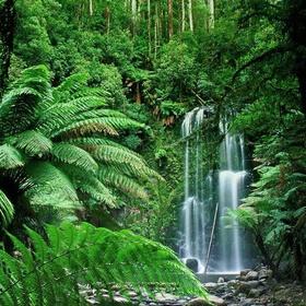 Visit the rainforest - Bucket List Ideas