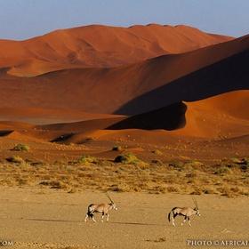 Visit Namib-nauklaft national park - Bucket List Ideas