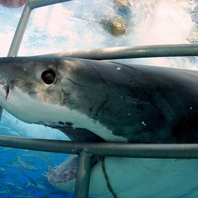 Cage dive with sharks - Bucket List Ideas