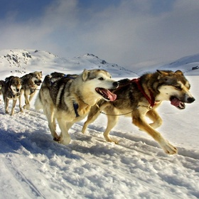 Go dog sledding - Bucket List Ideas