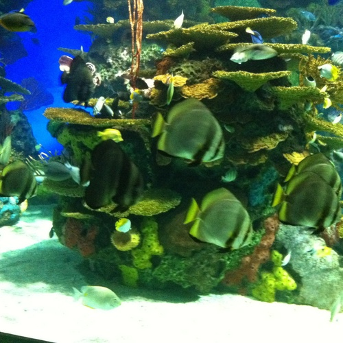 Go to ripley's aquarium - Bucket List Ideas