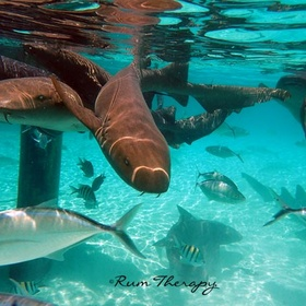 Swim with Nurse Sharks at Compass Cay, Bahamas - Bucket List Ideas