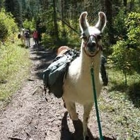 Go hiking with llamas - Bucket List Ideas