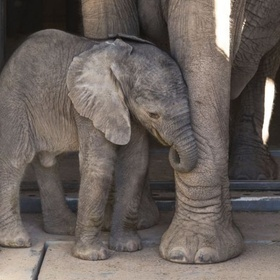 Meet an Elephant - Bucket List Ideas