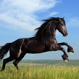 Learn Horse Riding - Bucket List Ideas