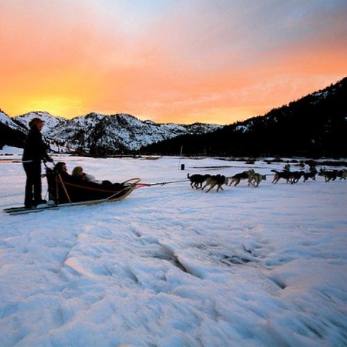 Go on a dog sledding expedition - Bucket List Ideas