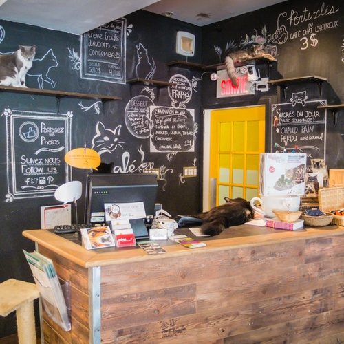 Visit cat cafe in Montreal - Bucket List Ideas