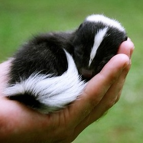 ⚜️Own a Skunk - Bucket List Ideas