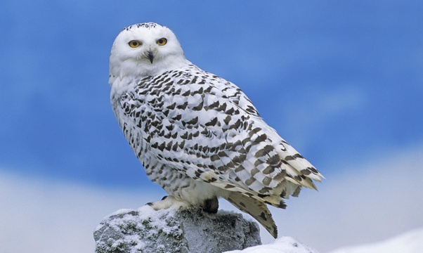 Hold an owl - Bucket List Ideas
