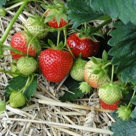 Eigen aardbeien kweken - Bucket List Ideas