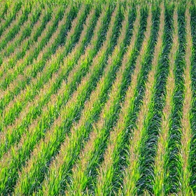 Get lost in a corn maze - Bucket List Ideas