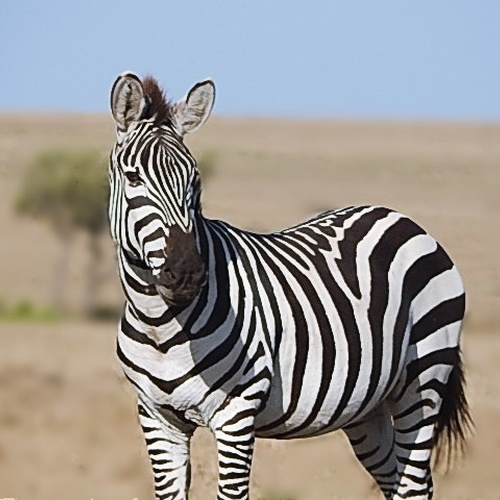 Go on safari - Bucket List Ideas