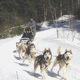 Try dog sledding - Bucket List Ideas