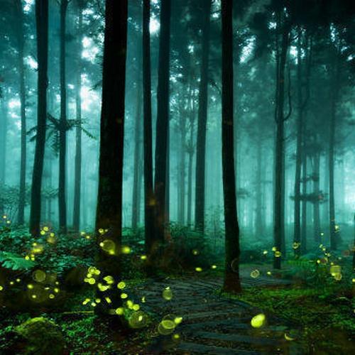 See Fireflies - Bucket List Ideas