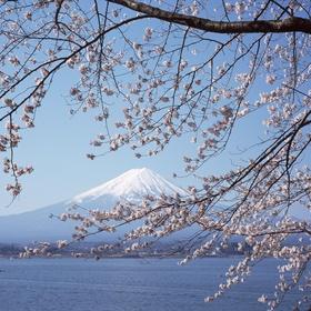 Travel to Japan - Bucket List Ideas