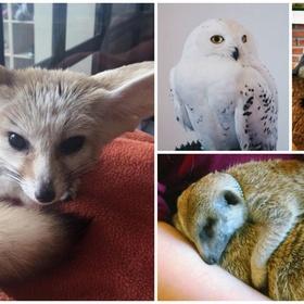 🍴 Eat at Little Zoo Café in Thailand - Bucket List Ideas