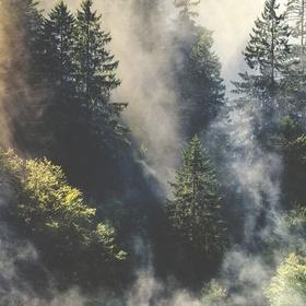 Wander the Black Forest in Germany - Bucket List Ideas