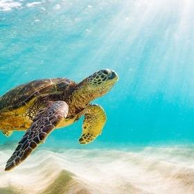Swim with Sea Turtles 🐢 - Bucket List Ideas