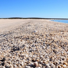 Visit Shell Beach in Australia - Bucket List Ideas