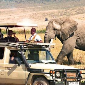 Take an African Safari - Bucket List Ideas