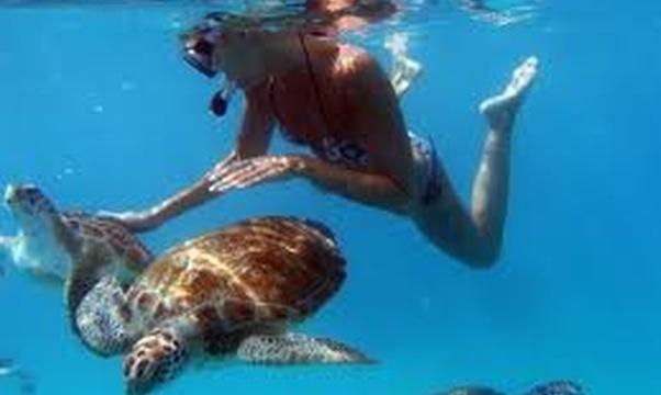 Swim with sea turtle's - Bucket List Ideas