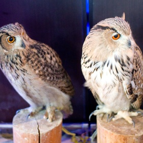 Visit Owl Forest Cafe in Tokyo - Bucket List Ideas