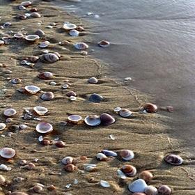 Collect Seashells - Bucket List Ideas