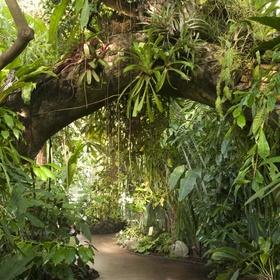 See the Amazon Rainforest - Bucket List Ideas