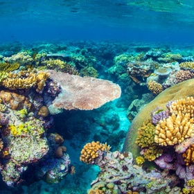 See the Great Barrier Reef - Bucket List Ideas